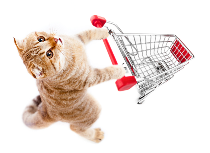 Give your cats some toys