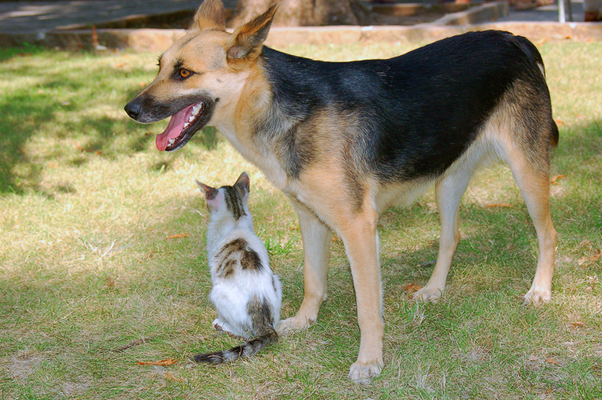 what are cats and dogs' ownership difference?
