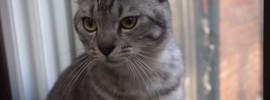 Meet Cat Kalou FB