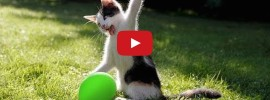 Cats love Balloon Explosion