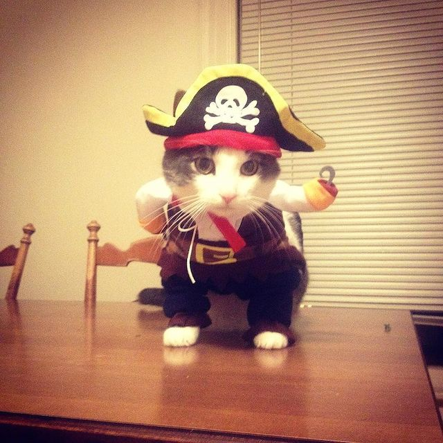 Pirates of the Catibbean