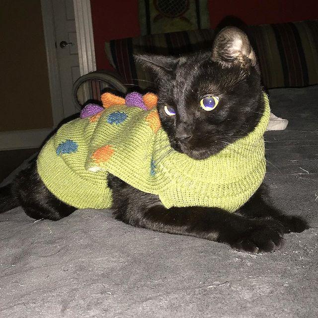 Grandma has taken up knitting