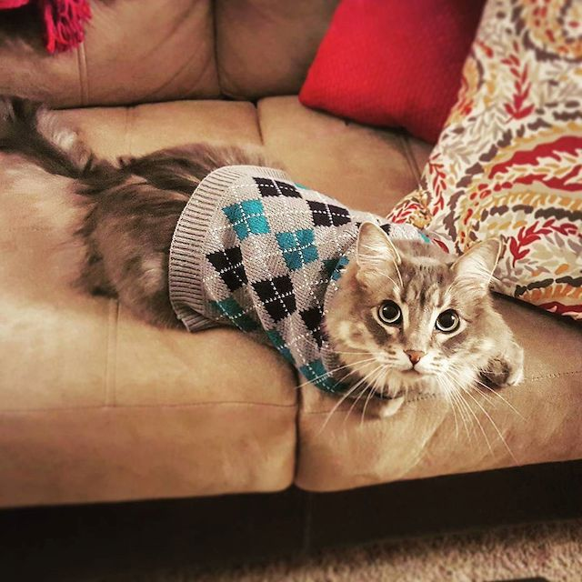 Such Sweater Much Cat