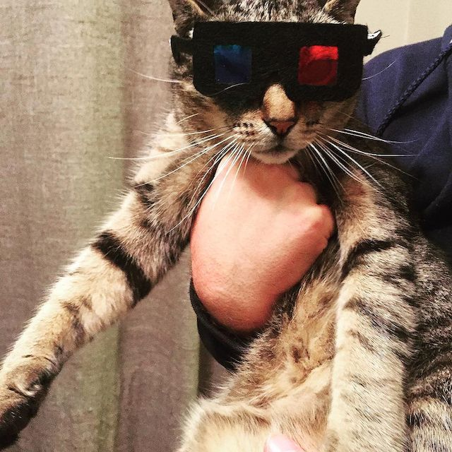 Red or Blue Pill Cat