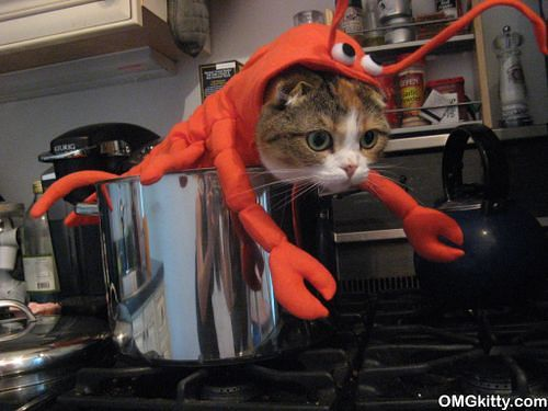 Lobster Cat