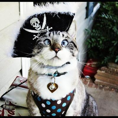 Cross-eyed Priate Cat